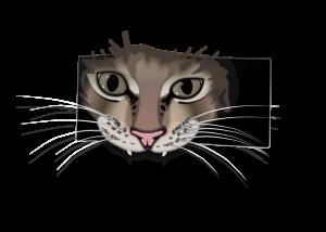 Cat looking through