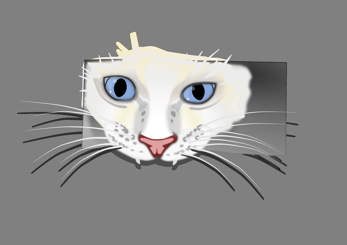 White cat looking through